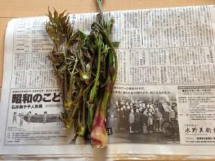タラの芽とウド